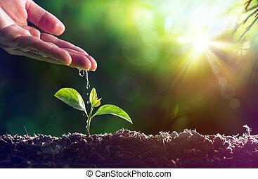 leben, bewässerung, -, pflanze, neu , sorgfalt