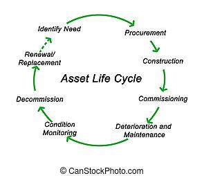leben, wert, zyklus