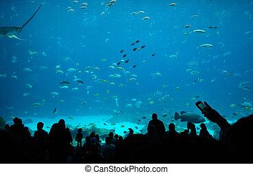 lebensmittel, georgia, gericht, aquarium