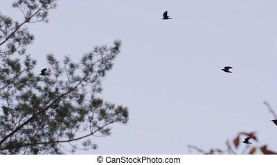 lecące ptaszki, przez, drzewa