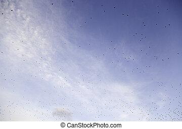 lecące ptaszki, w, przedimek określony przed rzeczownikami, niebo