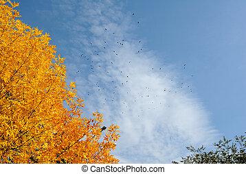 lecące ptaszki, w, przedimek określony przed rzeczownikami, sky.