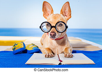 lecture, chien