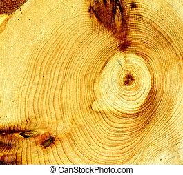 leeftijd, hout, ringen