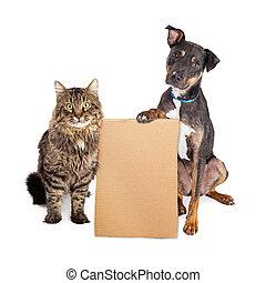 leeg, kat, dog, karton, meldingsbord