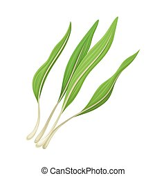 Leek Twigs as Kitchen Herb for Cooking Vector Element