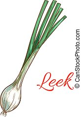 Leek vegetable plant vector isolated sketch icon