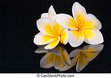 leelawadee, 花, 同时,, 它, reflecio