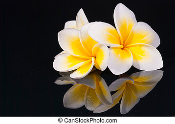 Leelawadee flower and its reflecio - Leelawadee flower and...