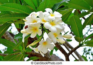 leelawadee flower