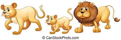leeuw, samen lopend, gezin