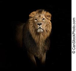 leeuw, verticaal, op, black