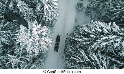 lefelé, ló, antenna, tető, hó, hajtott, erdő, sleigh, esés,...