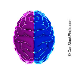 Left and Right Human Brain