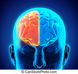 Business man drawing human brain diagram left and right brain functions left and right human brain ccuart Gallery