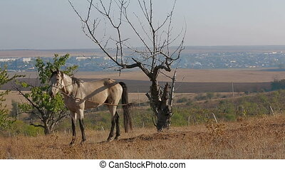 Left behind - Horse tied to a tree in a field and waiting...
