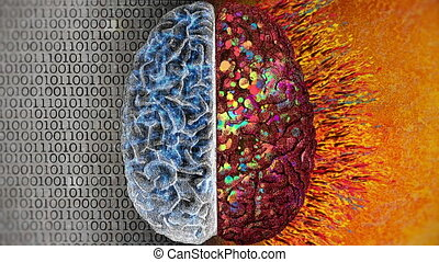 Left vs Right Brain - Difference between the two cerebral...