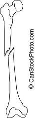 Leg bones, detailed illustration