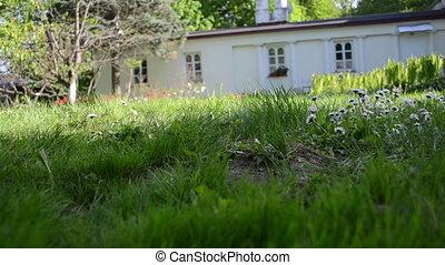 leg cut grass