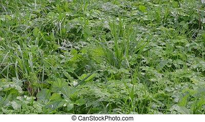 leg rubber boot grass - gardener in rubber boots walk...