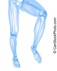 leg x-ray illustration - 3d rendered illustration of...