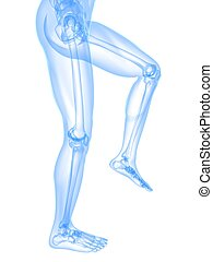 leg x-ray illustration - 3d rendered x-ray illustration of...