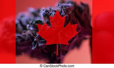legalization, de, médico, marijuana, en, canadá, en, 2019
