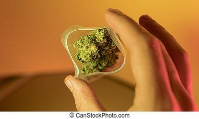 legalization, planos, marijuana, ilegal, russia., 2018, ...