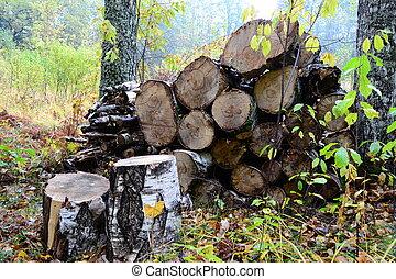 legna ardere, foresta