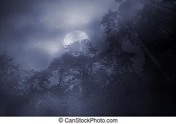 legnhe, nebbioso, luna piena, notte