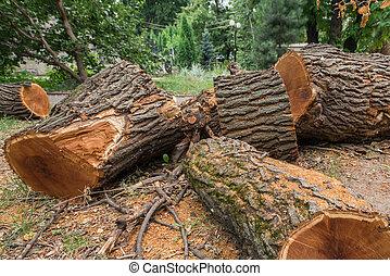 legno, 2