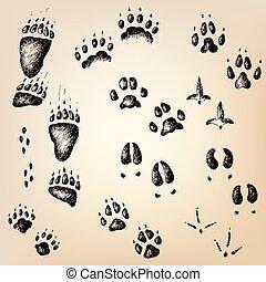 legno, camminare, set, piste, vettore, animale, uccello selvaggio