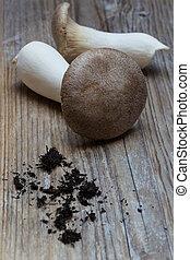 legno, concetto, tromba, fondo, fungo