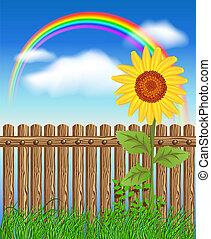 legno, erba, verde, recinto, girasole