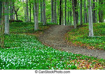 legno, fiori, parco, anemone