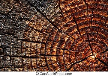legno, fondo, con, fesso, annuale, anello crescita