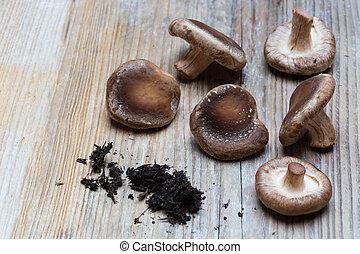 legno, marrone, champignons, concetto, fondo