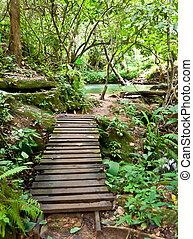 legno, ponte, in, forest.