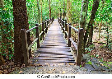legno, ponte, in, profondo, foresta, incrocio, acqua, flusso