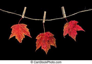 legno, presa a terra, foglie, clothespins, acero