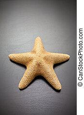legno, sfondo nero, starfish
