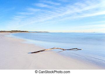 legno, tramonto, ramo, tempo, spiaggia bianca