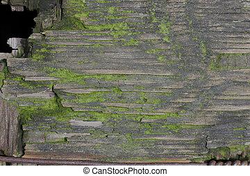 legno, verde, portato, fondo