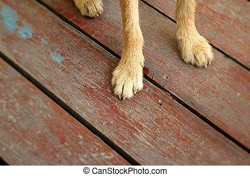 Legs brown dog sitting on the floor.