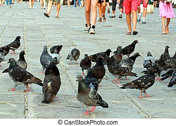 legs in the summer and pigeons and doves - people's legs in...