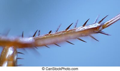 Legs of an Insect - Detailed Microscopic Footage of insect...