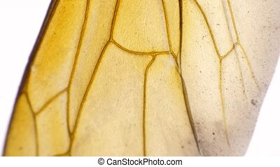 Legs of an Insect - Detailed Microscopic Footage of insect ...