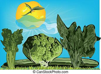 legumes, benefícios, paisagem