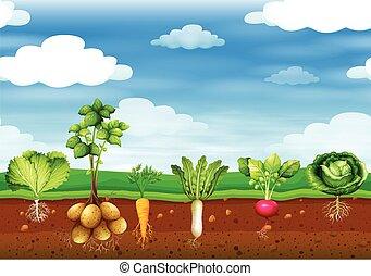 legumes frescos, chão