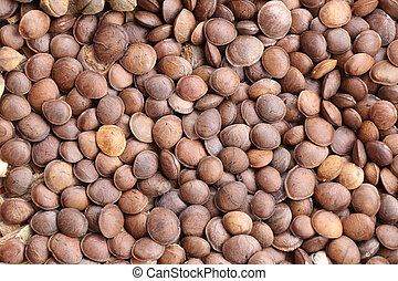 Legumes of Sacha inchi or Inca peanut. - Legumes of Sacha ...
